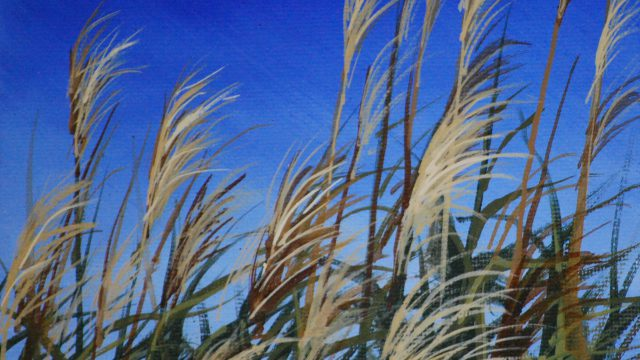 Dec 20: Breezy Marsh Grasses